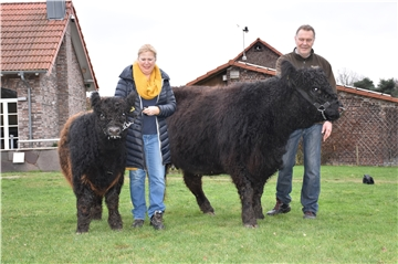 Galloways Hasenbeins Hof May Wiese Rinder